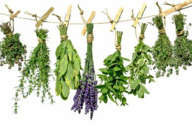 Termeszthető gyógynövények