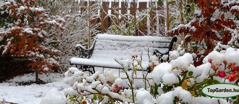 Decemberi tennivalók a kertben