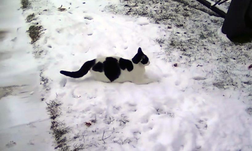 macska a hoban