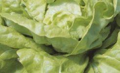 salat-edina permetezés