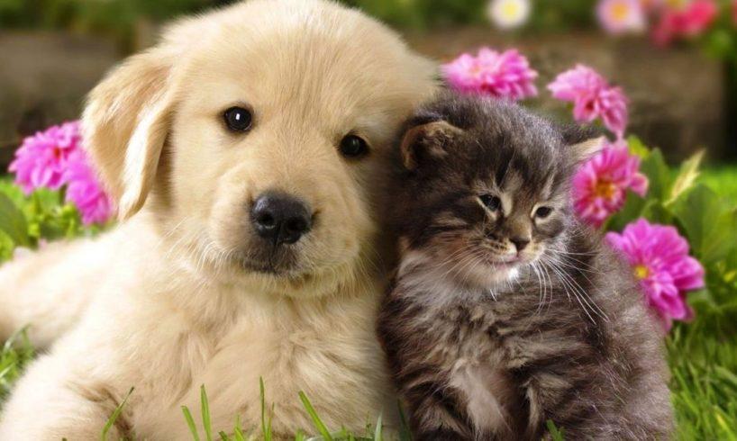 kutyák macska