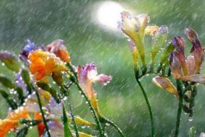 Májusi eső