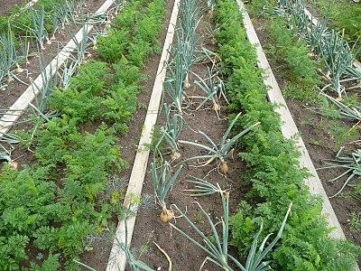 növényváltás