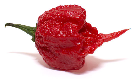 Carolina-Reaper-Pepper