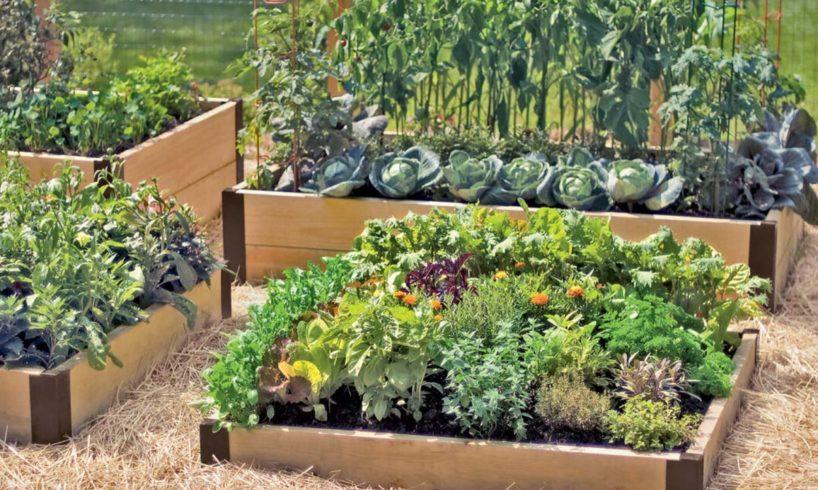 nyári-kert termesztése