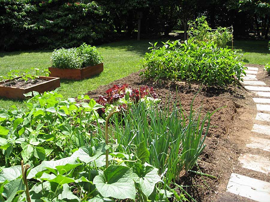 white-house-vegetable-garden-pictures