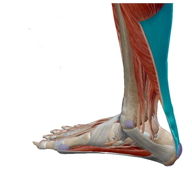 sarokfájás-achilles-tendonitis