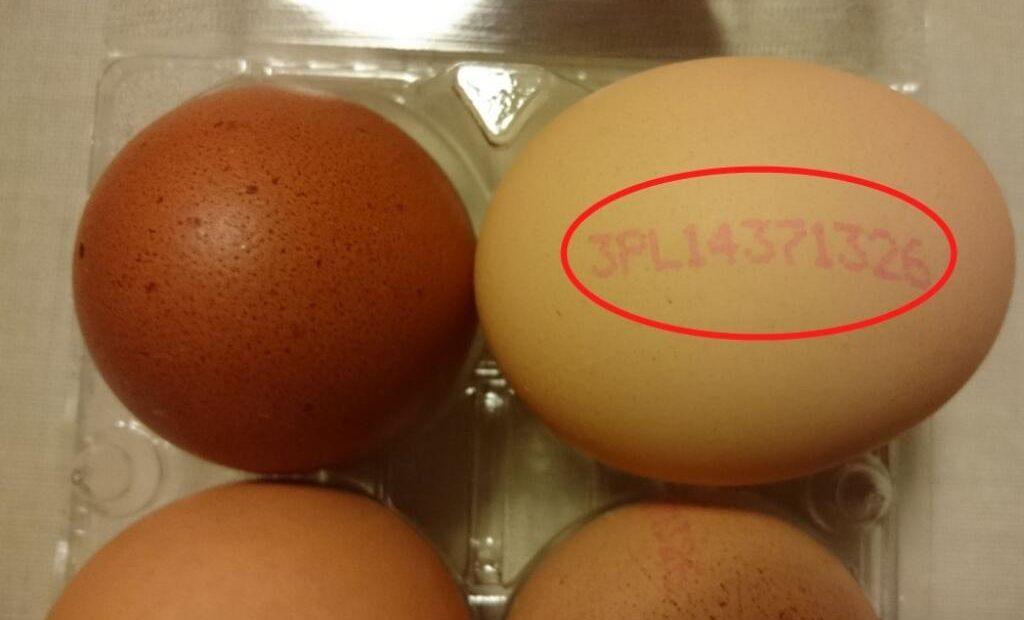 Lengyel tojás